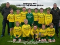 Ballingarry AFC Under 11 Cup Winners 2013/14
